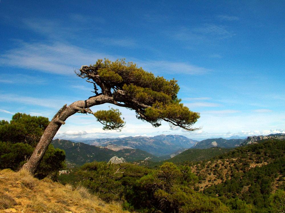 Reserva de la Biosfera de las Sierras de Cazorla y Segura: 30 ...