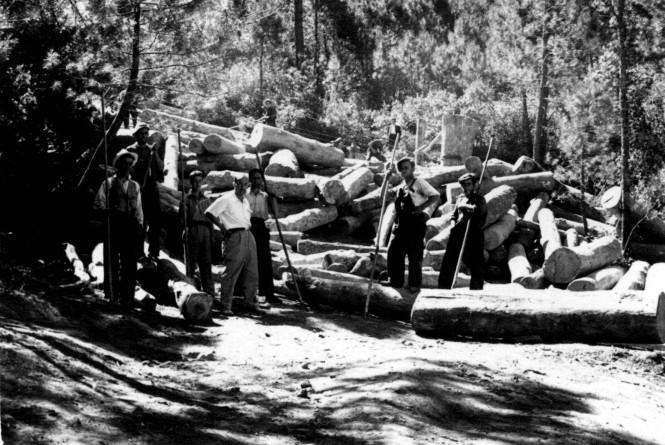 Transporte madera teleferico _preparando las trozas2 red