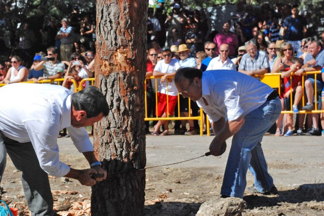 Apeo con tronzador Festival de la Sierra y el Hombre